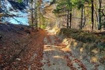 Excursie 1 zi TransAlpina Bănateană • Sâmbată 16 Noiembrie • 99 Lei • Plecare din Timisoara